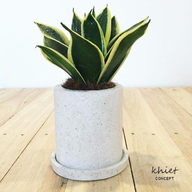 Sử dụng chậu xi măng để trồng cây xanh trong trang trí nhà ở và quán cà phê