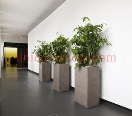 Chậu cảnh xi măng giá rẻrất thích hợp để trồng những cây cảnh đặt xung quanh vườn nhà, góc nhà ở, văn phòng để tạo không gian xanh mát và tô thêm vẻ đẹp cho khoảng không của bức tường nhà bạn, giúp bạn thư giản sau một ngày làm việc mệt mỏi.