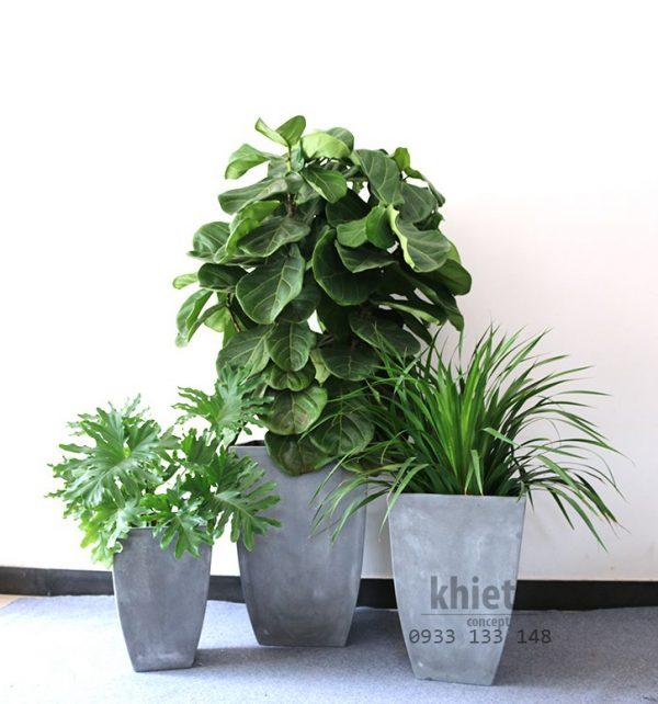trồng cây với chậu xi măng hình vuông bầu